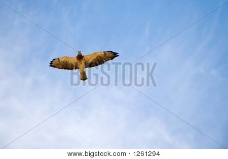 Hawk In The Sky
