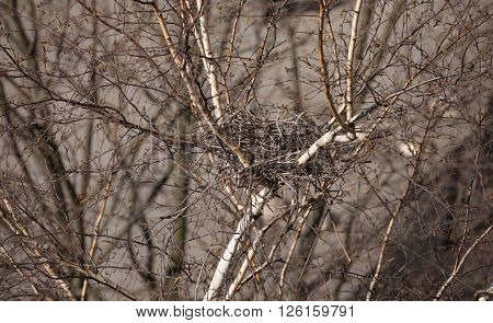 Spring empty bird's nest in a empty tree