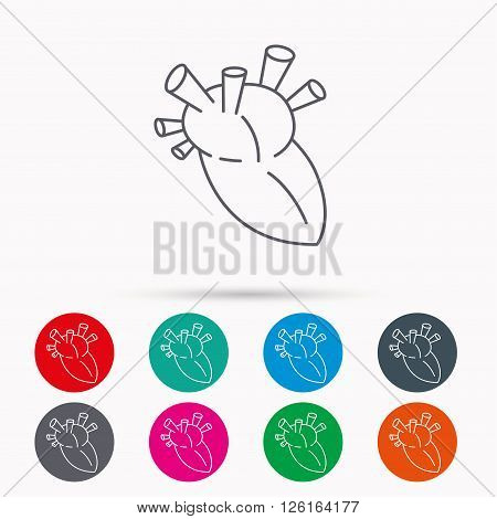 Heart icon. Human organ sign. Surgical transplantation symbol. Linear icons in circles on white background.