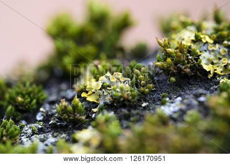 macro moss on cortex tree small vegetation