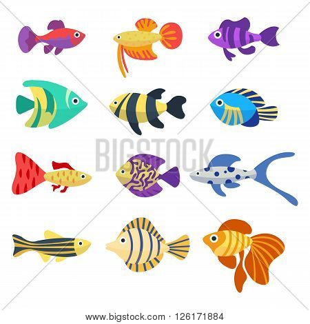 Set of aquarium fish. Cute cartoon colorful different fish. Aquarium underwater life. Flat vector icons. Isolated on white background