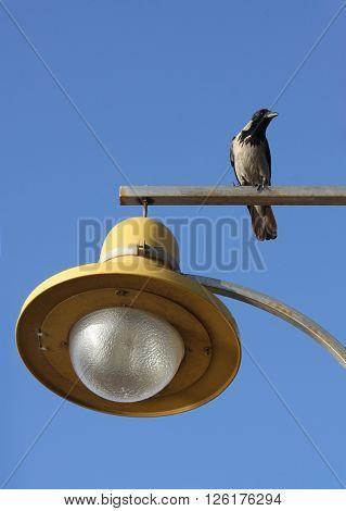 bird sitting on street lamp
