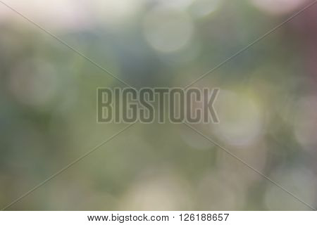 Natural Sunlight Bokeh And Blurry Background Stock Photo