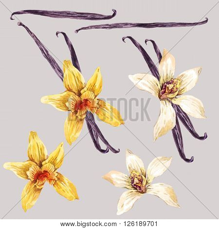 Set of watercolor flowers white and yellow orchid, orchid vanilla, botanical flower collection,  isolated illustration
