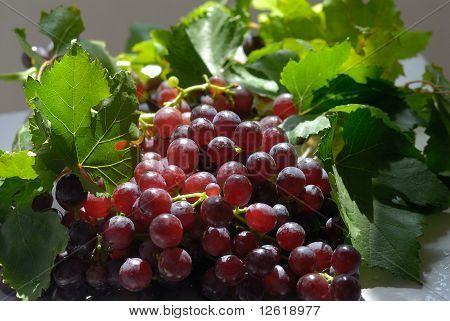 A LUSCIOUS BUNCH OF GRAPES