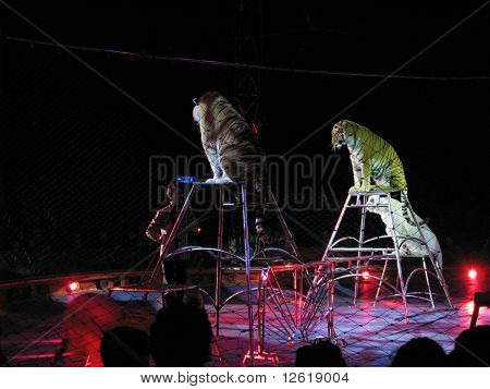 The Moira Orfei Circus - tigers