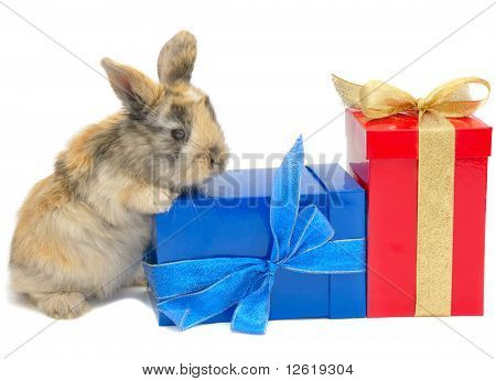 Little Rabbit Near The Boxes With Gifts
