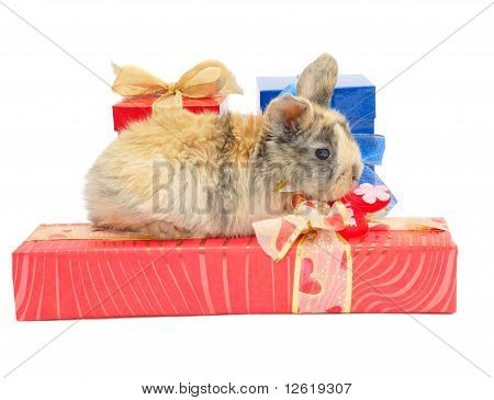 Little Rabbit On The Boxes With Gifts