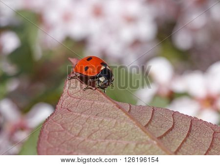 close up of ladybug sitting on leaf of tree