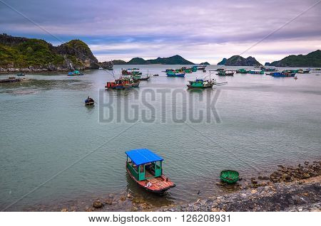 Many fishing boats anchored near the island of Cat Ba.