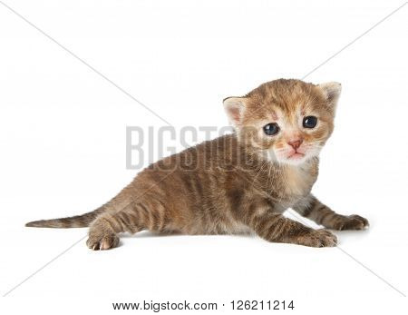 Cute grey striped kitten. Cute kitten 2 weeks old, creeping isolated at white background. Adorable pet. Small heartwarming kitten. Little cat. Closeup isolated. High key