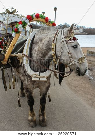 Horse with coach. Domestic horses live and work in urban areas. ** Note: Soft Focus at 100%, best at smaller sizes