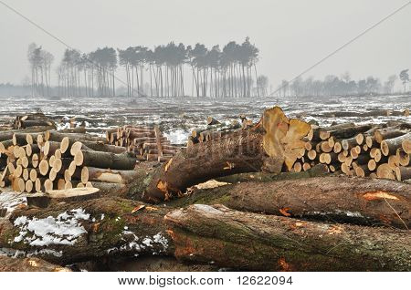 A Forest Cut Down