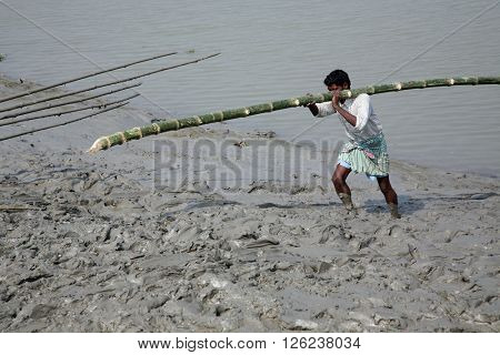 GOSABA, WEST BENGAL, INDIA - JANUARY 19: Workers unload cargo from the boat to the shore of the Ganges in the deep mud in Gosaba, India on January 19, 2009.
