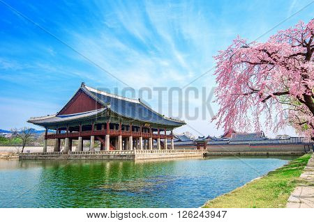 Gyeongbokgung Palace with cherry blossom in spring, South Korea.