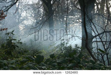 Niebla en Woodlands
