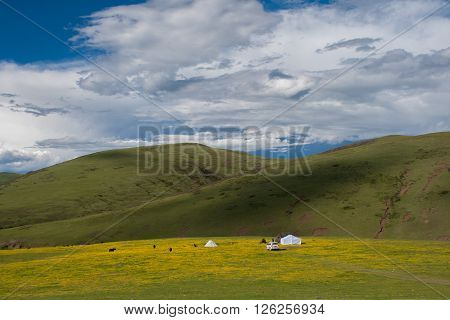 Beautiful grassland landscape in Tibet, China (Sichuan province)