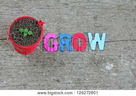Young sprout in small little red pail with word GROW beside it. Concept.
