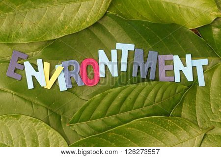 Colourful wooden alphabet block forming word ENVIRONMENT on green leaves. Concept of green and environment.