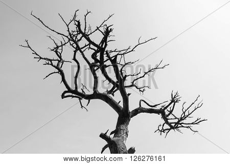 Abstract dry and dead tree against sky black and white image