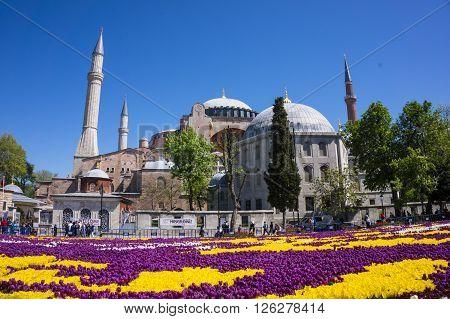 SULTANAHMET, ISTANBUL - APRIL 2016: Istanbul tulip festival area and the Hagia Sophia image. April 18, 2016 in Istanbul, Turkey.