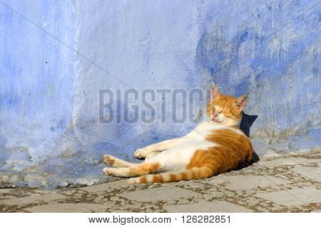 Lazy cat in the Old Medina of Chefchaouen, Morocco