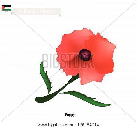 Palestine Flower Illustration of Red Poppy Flowers. One of The Most Popular Flower in Palestine.