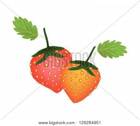 Fruit Ripe and Sweet Strawberry Isolated on White Background.