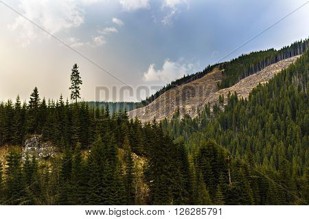Deforestation in Romania in an abusive way cutting down whole forests irresponsibly