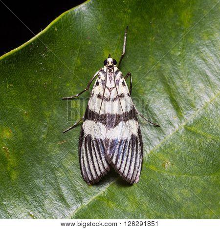 Unidentified Moth On Green Leaf