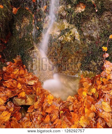 Close-up Of Small Waterfall Flowing On Autumnal Leaves