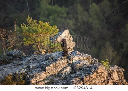 Beautiful mutt black dog Amy on mountain rock, close-up.