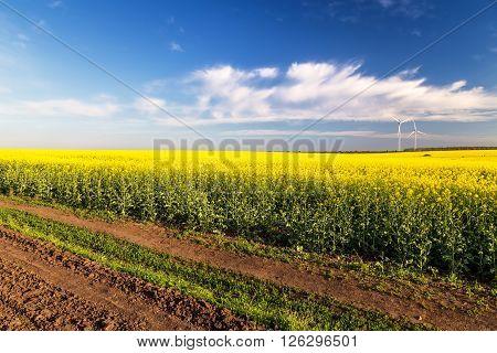 Rape flowers were yellowing the fields with blue sky
