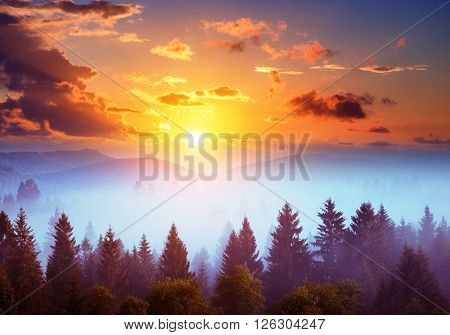 Majestic view of the woods glowing by sunlight at twilight. Dramatic and picturesque morning scene. Location place: Carpathian, Ukraine, Europe. Beauty world. Retro and vintage toning effect.