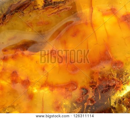 Baltic amber resin segments background or texture