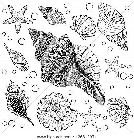 Vector set Shells, zentangle seeshell for adult anti stress Coloring pages, patterned sea shell, cockleshell illustration for tattoos with high details. hand drawn sketch, Artistically decorative henna print for t-shirt