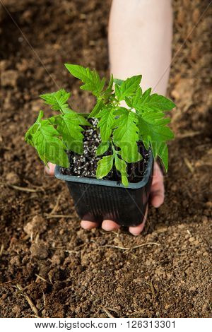 boy hand holding green small plant new life concept.