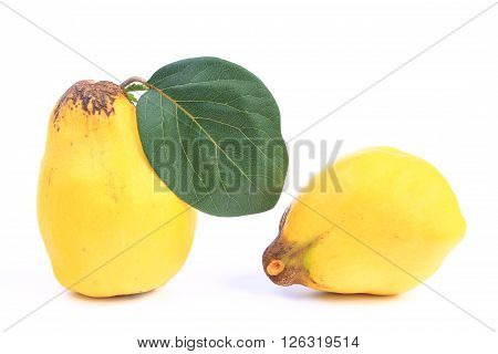 Ripe quince fruits isolated against white background (Cydonia oblonga)