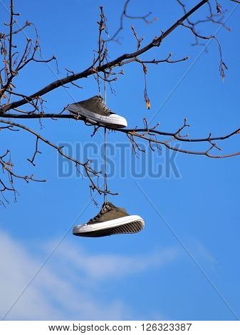 Old sport shoes hanging on a tree against blue sky