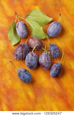 Damson plum (damascene) fruits from semi-wild cultivation over painted textile background. Overhead view.