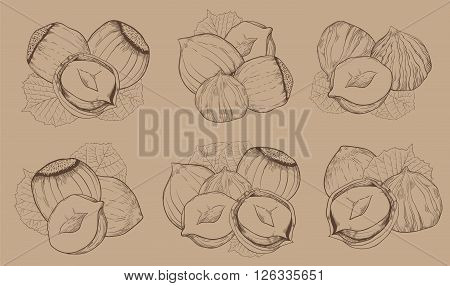 Hazelnut on light brown background. Hazelnut seeds. Engraved raster illustration of leaves and nuts of hazelnut. Isolated hazelnut.