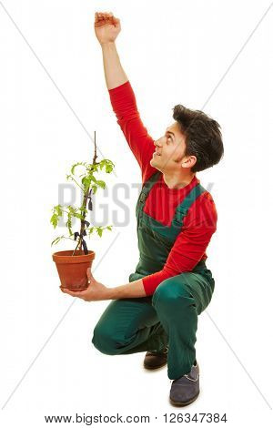 Gardener estimating growth of tomato plant in his hand