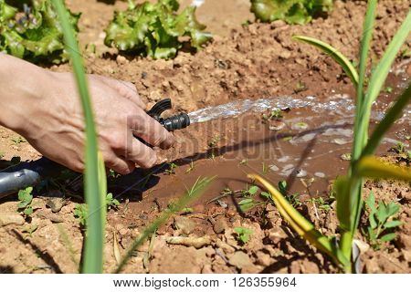 closeup of the hand of a young man irrigating an organic orchard with a hose
