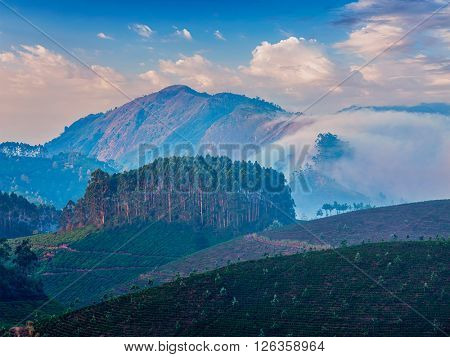 Kerala India travel background - sunrise and tea plantations in Munnar, Kerala, India