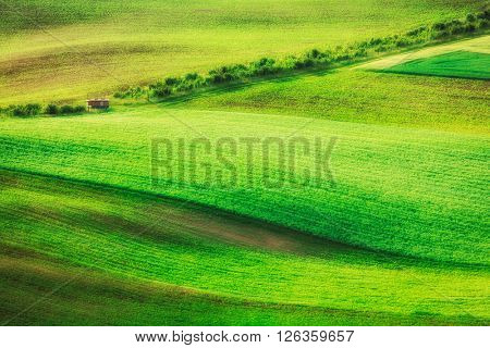 Rolling landscape of green fields in South Moravia, Czech Republic