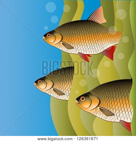 Redfins flock. Fish look out of algae. Under the water. Bright colors. Vector Image.