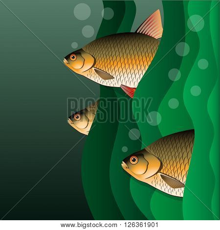 Redfins flock. Fish look out of algae. Under the water. Vector Image.