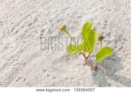New green tree breaks through the sand