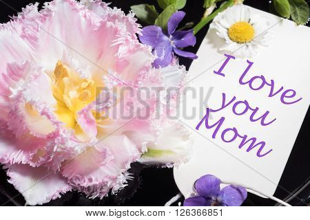 tulip violet and daisy with card i love you mom