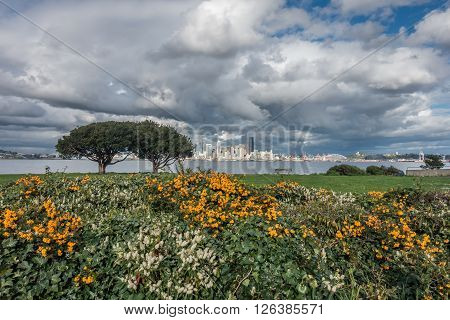A view of the Seattle skyline with flowers and trees in the forefround.